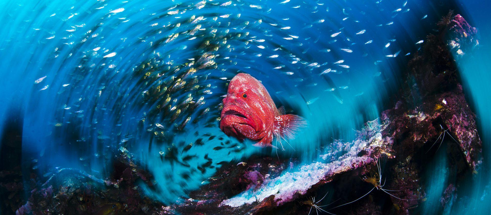 Yakushima Diving Life